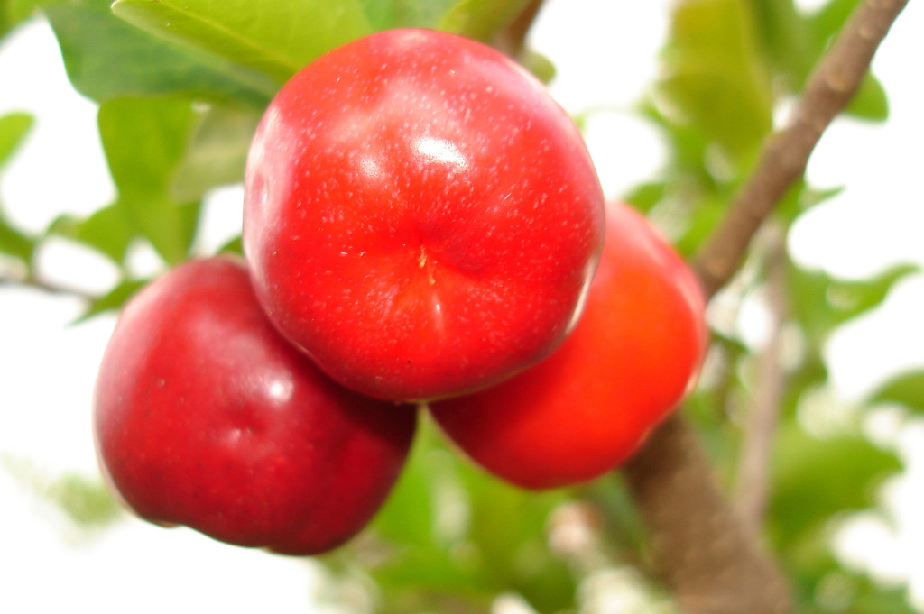 acerola-benefits